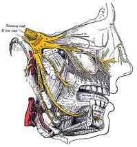 Schemat budowy nerwu trójdzielnego