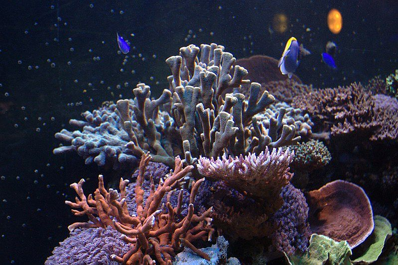 Oceanarium w Gdyni