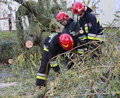 Nowa Ruda: nie żyje mężczyzna. Na jego auto przewróciło się drzewo