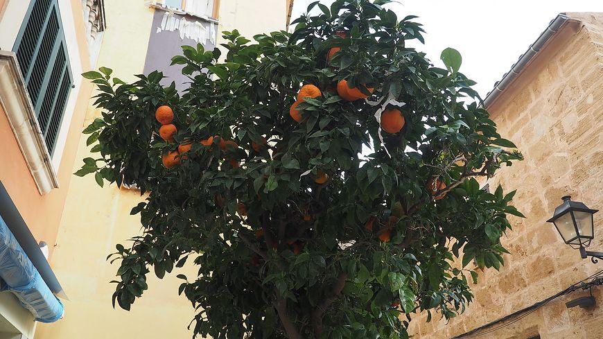 Pomarańcze na chorobę