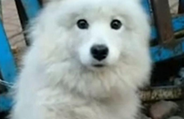 Pies miał zostać zjedzony w Chinach. Wtedy stało się to. Cały świat poruszony