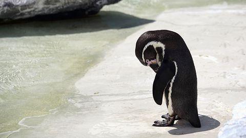 Linux 4.16 najszybszy, każdy kolejny obniża wydajność. Niestety, to dotyka większości