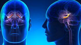 Cecha, która świadczy o inteligencji. Czy zauważasz ją u siebie? (WIDEO)