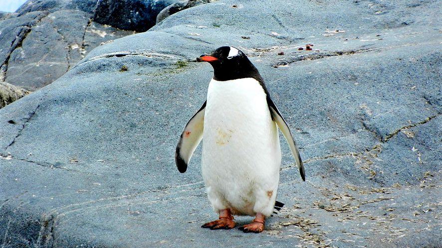 Linux 5.9 wydany: znaczące usprawnienia w sferze pamięci masowych