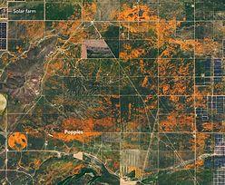 """Niesamowite widoki od NASA. Efekt """"marcowego cudu"""" widać z kosmosu"""