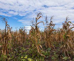 Susza 2020. Rolnicy nie myślą już o koronawirusie