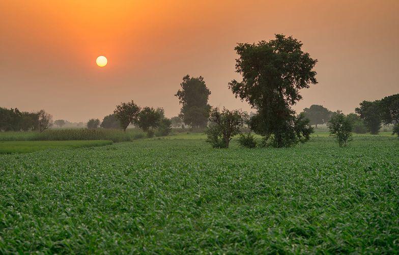 Pakistan chce zasadzić aż 10 miliardów drzew, by walczyć ze zmianami klimatu