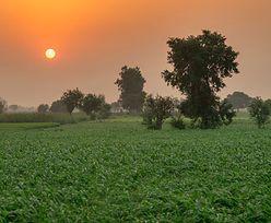 Kraj stworzy 65 tys. miejsc pracy, by zasadzić 10 miliardów drzew