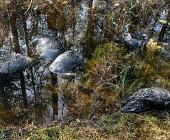 Makabryczne odkrycie w lesie. Zbierali śmieci, nagle natknęli się na worki