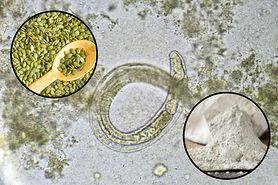 3 naturalne sposoby na pozbycie się pasożytów z organizmu