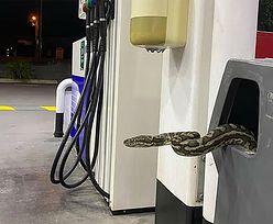 Przerażające odkrycie na stacji benzynowej. Kierowców zamurowało!