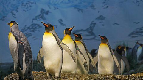 Linux 4.14 LTS dostępny – pierwsze wydanie z sześcioletnim wsparciem