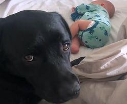 Ten pies jest niesamowity. Wideo podbija sieć, a malec jest szczęściarzem!