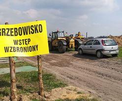 Grzebowisko zarażonych ptaków koło Ciechanowa. Zaledwie 450 m od zabudowań