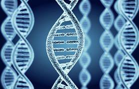 Cyklopia (jednoocze) - przyczyny, objawy, cyklopia u zwierząt
