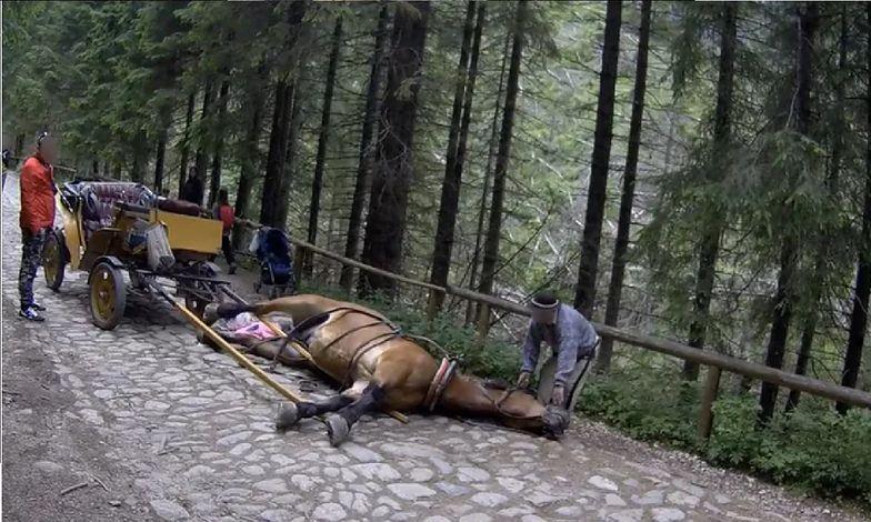 W Tatrach znowu padł koń. Szokujące zachowanie woźnicy
