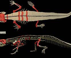 """Skamieliny mają 150 mln lat. Należą do """"dziadka"""" współczesnego krokodyla"""