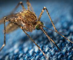 Coś się dzieje z komarami. Zaskakujące wyniki obserwacji