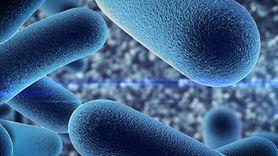Bakterie probiotyczne w jogurtach