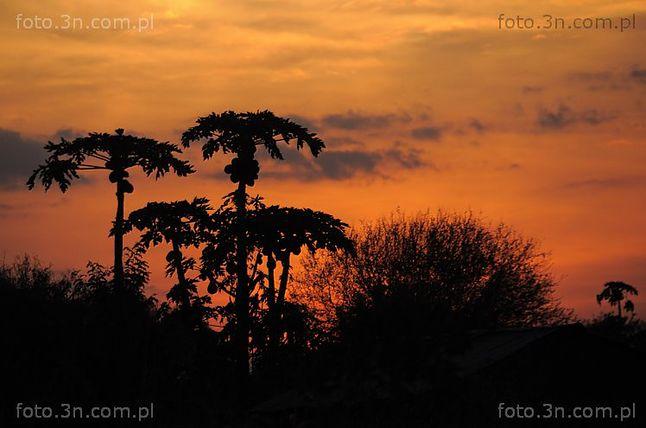 Jedno ze zdjęć Stefana Nawrockiego, z wyprawy do Keni