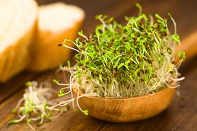 Kiełki lucerny - właściwości zdrowotne. Jak je hodować?