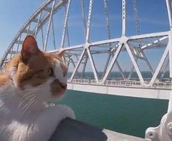 Kot Mostik budzi sensację. Pupil wszystkich Rosjan znów dał o sobie znać