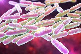 Czym są probiotyki?