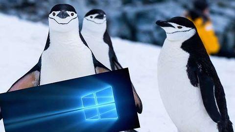 Canonical poszukuje speców od Windowsa i WSL. Ubuntu ma zdominować tę warstwę