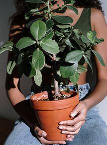 Tinder dla roślin - czyli jak znaleźć nową, zieloną miłość