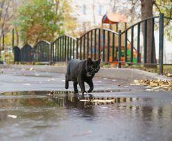 Kot przez 11 lat żył na ulicy. W końcu wrócił do swojej właścicielki