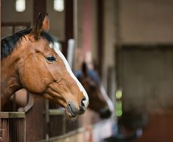 Tragedia pod Słupskiem. Koń śmiertelnie poturbował 12-latkę