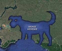 """""""Tymczasem na Morzu Azorskim"""". Internauci kpią z wpadki Petru"""