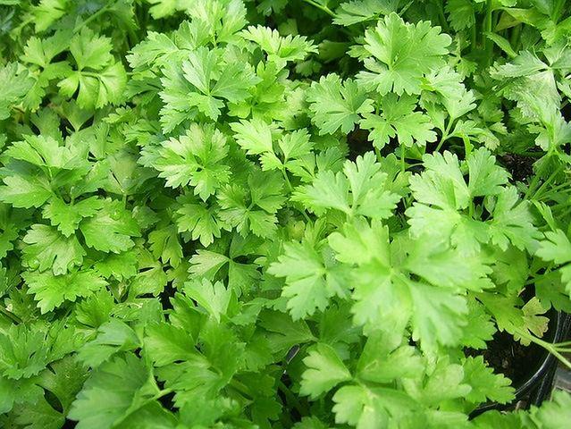 Liściaste i zielone