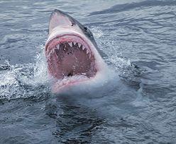 Przerażający atak rekina w Kalifornii. Dziecko w stanie krytycznym