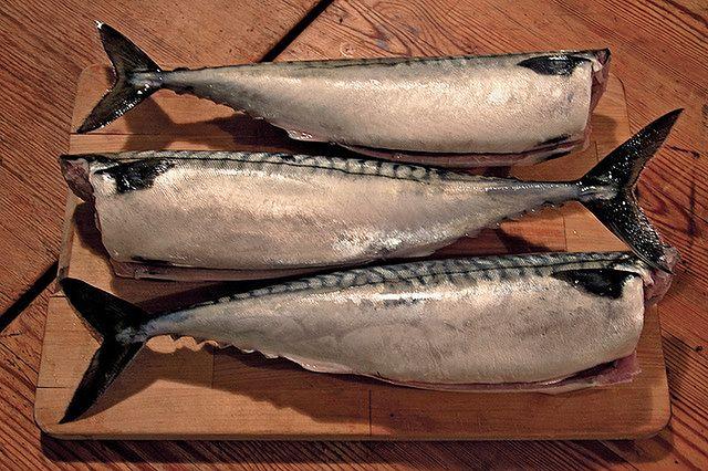 Wybredna rybia smakoszka