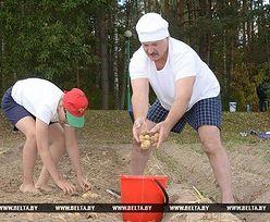 Ostatni dyktator Europy na wykopkach. Zobacz, jak Łukaszenka zbierał ziemniaki