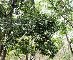 W ciągu następnych 20 lat lasy równikowe mogą zmienić się z pochłaniacza CO2 w jego źródło