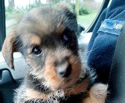 Pies znaleziony w pojemniku na używaną odzież. Szybko zyskał nowy dom