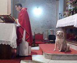 """Pies znalazł schronienie w kościele. Został """"ministrantem"""""""