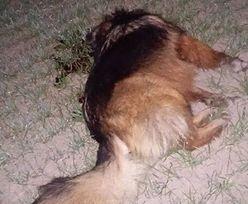 Lubelskie: myśliwy zastrzelił psa na oczach właścicielki