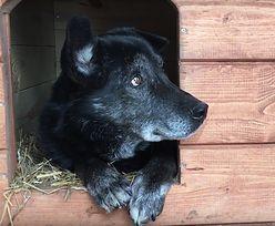 Historia jak z filmu. Pies przez 5 dni wracał do schroniska dla zwierząt
