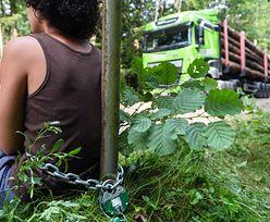 Atak na ekologa broniącego Puszczy Białowieskiej? Policja zatrzymała dwóch mężczyzn