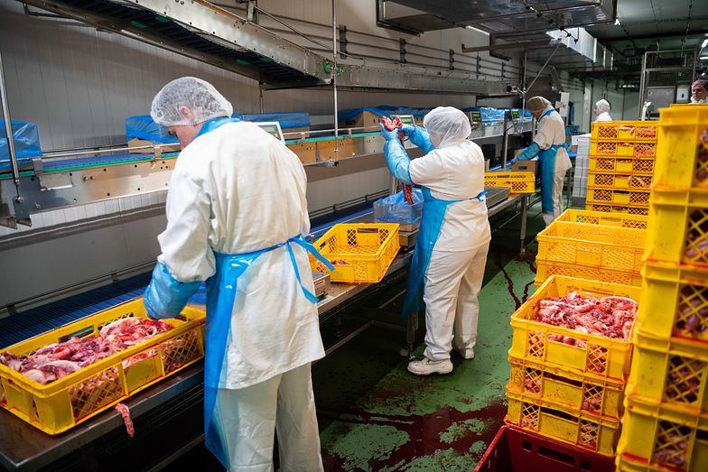 Przez dwa miesiące Ukraińcy za darmo produkowali mięso dla Biedronki