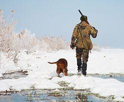 Niemcy: pies postrzelił myśliwego. Myśliwy stracił pozwolenie na broń