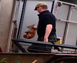 Wielka Brytania. Myśliwy karmił psy żywymi lisami. Uniknął więzienia