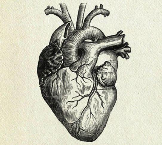 Choroby serca (prezentacja edukacyjna)