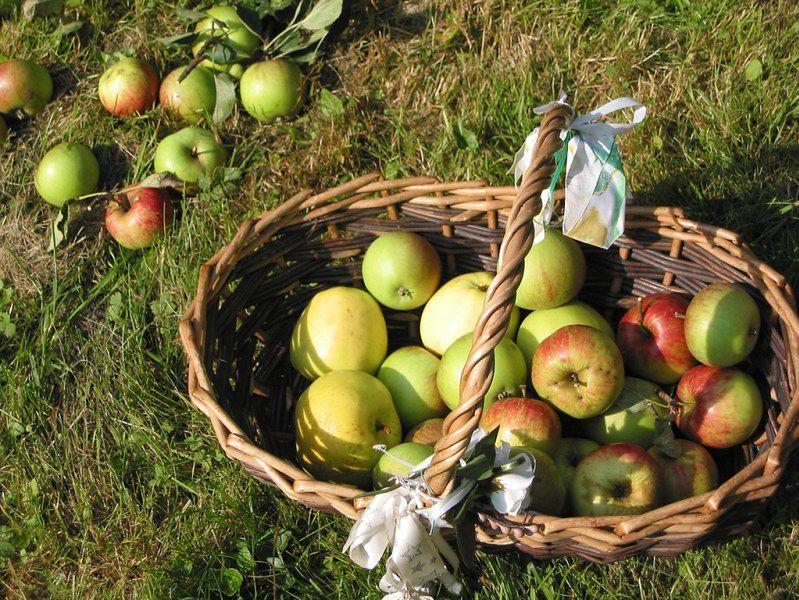 Żywność ekologiczna - jabłka