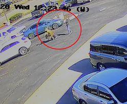 Jeleń znokautował mężczyznę. Nagranie sprzed McDonald'sa hitem sieci