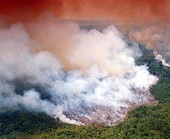 """Amazonia płonie. """"Biznes zwycięża. To punkt krytyczny zmian klimatycznych"""""""