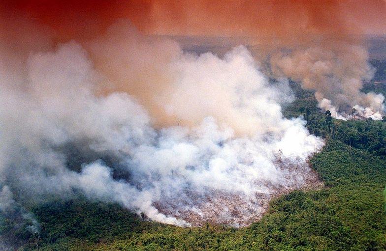 Według Avaaz co minutę Amazonia kurczy się o 1,5 boiska piłkarskiego.